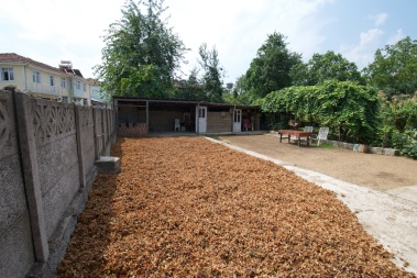 hazelnuts drying in the sun