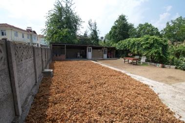 hazelnuts drying in the sun