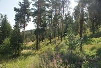 Camlidere (green pines), Turkey