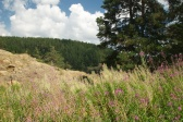 wild field, Turkey