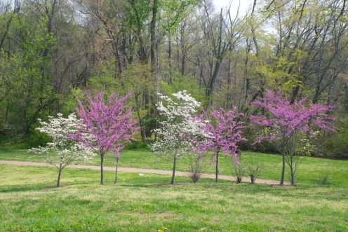 spring colors, Virginia