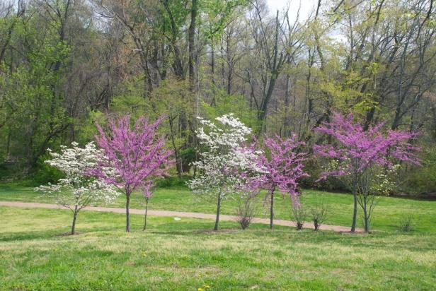 spring colors, Virginia