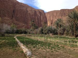 a family's terrace plot