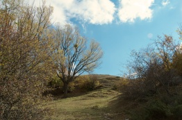I love the mossy hills