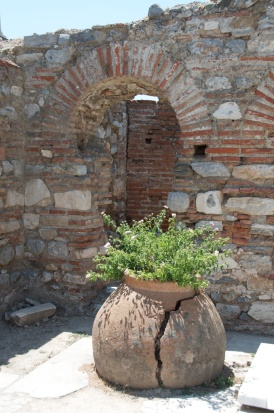 I love it when plants grow up among the ruins