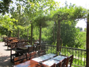 eat under the trees and a canopy of vines