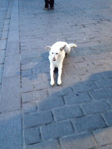This sphinx-posing dog was outside the hamam