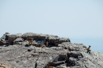 at first we couldn't see these guys, but if you stare at the rocks long enough, they're everywhere