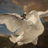 The Threatened Swan, by Jan Assellijn