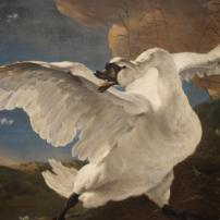 The Threatened Swan, by Jan Assellijn