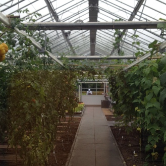 a chef and his greenhouse